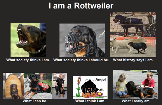 I_Am_Rottweiler